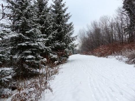 Photo de paysage enneigé : Fin d'automne au Québec - Première neige - Novembre 2013 | Faaxaal Forum Photos gratuite Faune et Flore | Scoop.it