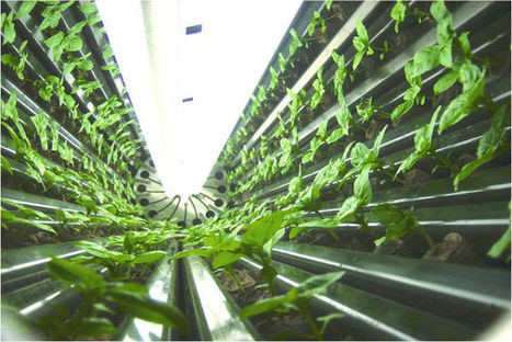 Pennsylvania Builds World's Biggest Vertical Farm - Sourceable | Vertical Farm - Food Factory | Scoop.it