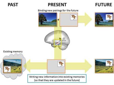 Our Brains Rewrite Our Memories, Putting Present In The Past | With My Right Brain | Scoop.it