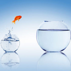 Want to Grow Fast? Focus on Profits, Not Revenue | tips of business development | Scoop.it