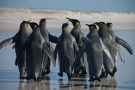 Google releases Penguin 2.0 algorithm update | SEO, social media and digital marketing | Scoop.it