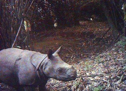 Rhino killed in Kaziranga, horn removed | Rhino poaching | Scoop.it
