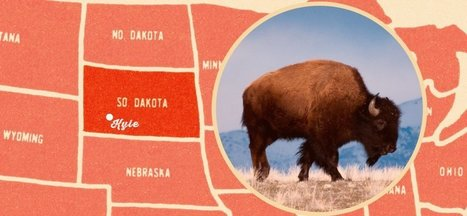 The Centuries-Old Buffalo Recipe Transforming a Troubled Community | Peer2Politics | Scoop.it