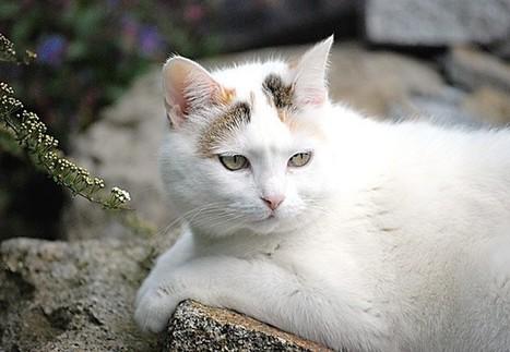 Katze | kostenlose-Bilder | Scoop.it