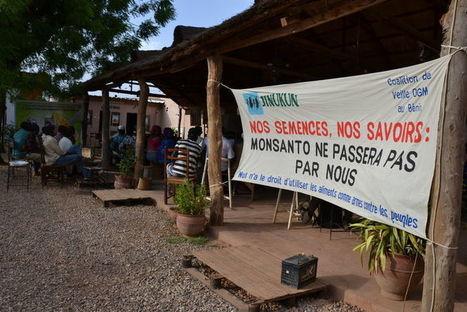Manifestation au Burkina Faso contre les OGM de Monsanto | Nourrir la planète... autrement | Scoop.it