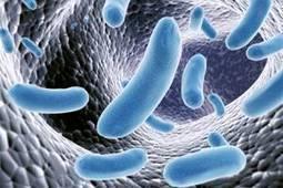 Microbes, virus, bactéries... Quelles - Musulman et fier de l\'être - Bloguez.com | Le Coran | Scoop.it