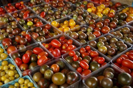 Why tomatoes lose flavor in fridge: their genes chill out | Vertical Farm - Food Factory | Scoop.it