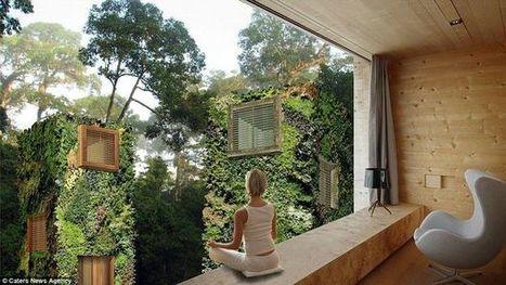 [vidéo] Les maisons dans les arbres urbaines de Raimond de Hullu | Maison ossature bois écologique | Scoop.it