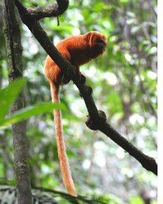 Microsoft applies big data toward cataloging endangered species | Complex Insight  - Understanding our world | Scoop.it