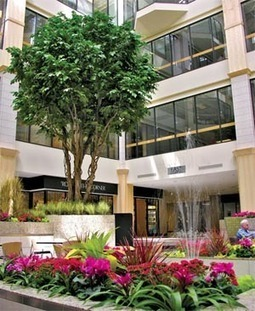 Interior landscaping design to enhance your business | Interior Office Plants | Scoop.it
