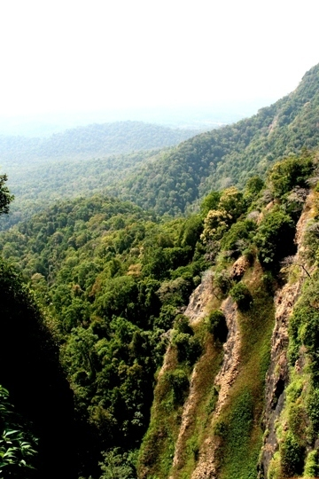 The power of connections: India to establish Asia's largest protected forest   Nature and Culture   Scoop.it