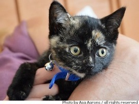 How to Make Your Branded Content as Likeable as a Kitten | MarketingHits | Scoop.it