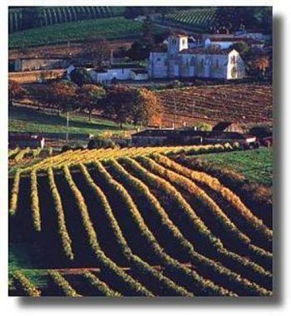 Dossier > Vieillissement des vins   TPE degré d'alcool   Scoop.it