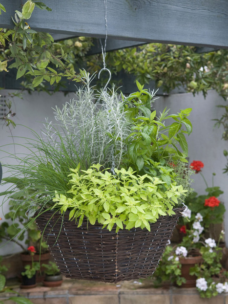 Let Us All Produce Our Own Herbs at Home! | The Green Fingers | Scoop.it
