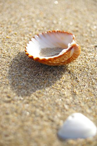 12 Actividades con hijos en la playa | Cosas que interesan...a cualquier edad. | Scoop.it
