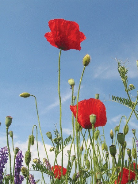 Australia and Tall Poppies: Time to Wake up | Business Brainpower with the Human Touch | Scoop.it