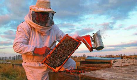 Buenos Aires exporta miel y abejas reina - Perfil.com | Apicultura Investigación | Scoop.it