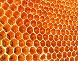 There Are Shocking Differences Between Raw Honey And The Processed Golden Honey Found In Grocery Retailers - Waking Times « Waking Times | Inspired | Scoop.it