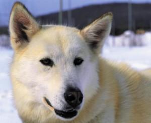 Louer un cottage en fonction de la personnalité de son chien | Mais n'importe quoi ! | Scoop.it