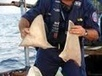 Palau and Greenpeace Bust Shark-Fin Pirates   Use Celsias.com - reduce global °Celsius   Ocean Conservation   Scoop.it