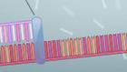Learn.Genetics™ | Biocapax | Scoop.it