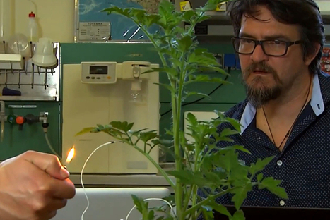 These scientists want us to hear what #plants have to say, my girlfriend already knows! | Limitless learning Universe | Scoop.it