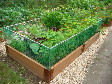 Raised Bed Rabbit Fence | Backyard Gardening | Scoop.it