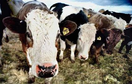 Scientists turn cow manure into clean drinking water - Times of India | Aquafresh Water Purifier | Scoop.it