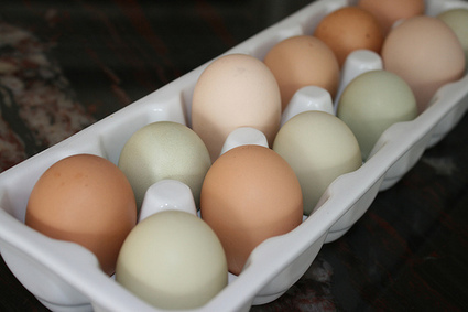 Skippy's Vegetable Garden: chickens and eggs | Urban Chicken Keeping | Scoop.it