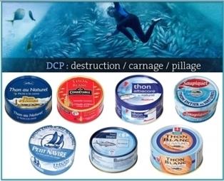Protection des océans : quelle boîte de thon choisir ? | Dans mon sac de plouf | Scoop.it