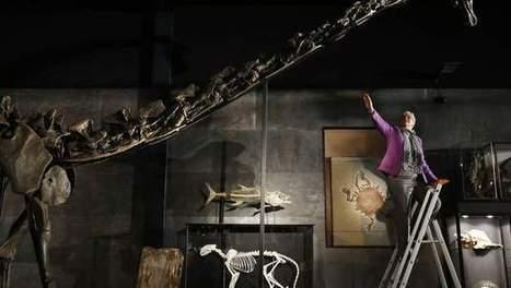 Dinoskelet 'Misty' voor bijna half miljoen onder de hamer | KAP-DeBrandtJ | Scoop.it