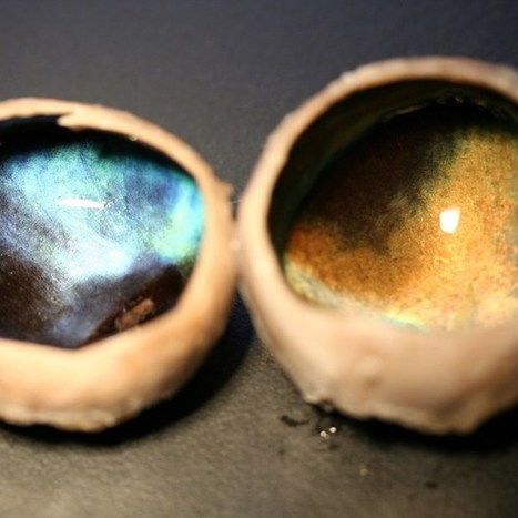 BBSRC funded: The science behind the colour-shifting capabilities of Arctic reindeer eyeballs | BIOSCIENCE NEWS | Scoop.it