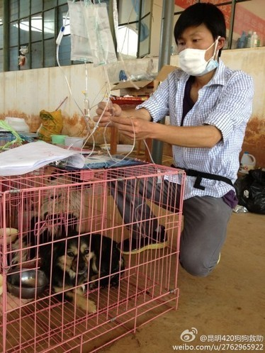 Update - World Wide Legal Action 4 Animal Rights   Animal Research   Scoop.it