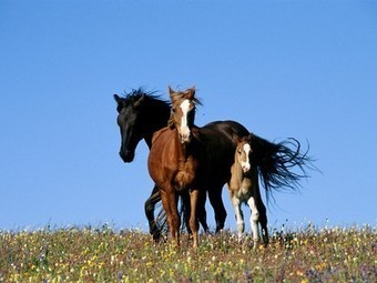 Horses, Horse Pictures, Horse Facts - National Geographic   Horse Industry News   Scoop.it