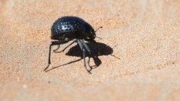 Bug inspires new self-filling water bottle | Good News | Scoop.it