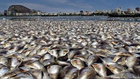 Alarming rise in mass animal deaths   All media content   DW.COM   19.02.2016   Farming, Forests, Water, Fishing and Environment   Scoop.it