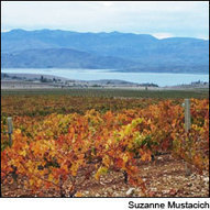 The Quest for Wine's Origins | Vitabella Wine Daily Gossip | Scoop.it