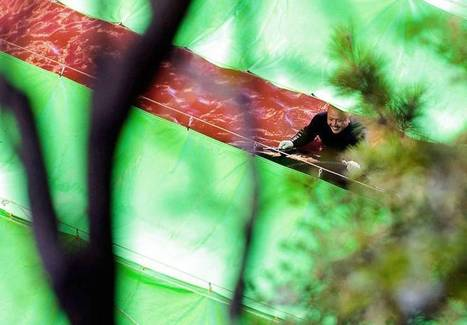 Taiji dolphin cull inhumane: study | Dolphins | Scoop.it