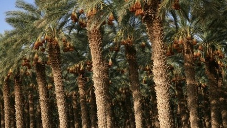 10 top ways Israel fights desertification | MishMash | Scoop.it