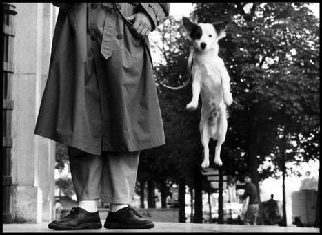25 Practical Tips from Elliott Erwitt for Street Photographers | Photojournalism & documentary photography Fotografia sociale e documentaria, fotogiornalismo | Scoop.it