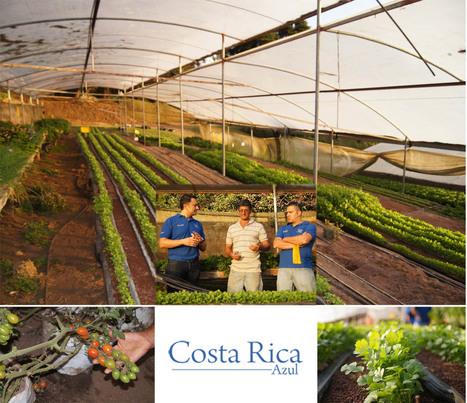 Alimentos hidropónicos impulsando al turismo | Vertical Farm - Food Factory | Scoop.it