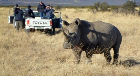 Tiny Chip Helping Save Huge Rhinos - Intel Free Press | Technology | Scoop.it