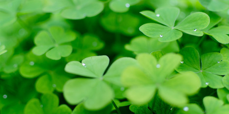 Celebrate St. Patrick's Day With 15 English Words Derived From Irish Gaelic - Huffington Post | Neologisms | Scoop.it