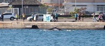 Des baleines défilent dans le port de Papeete | La Dépêche de Tahiti | TAHITI Le Mag | Scoop.it