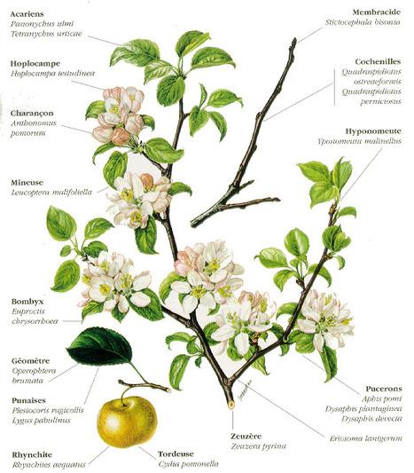 Fiche pédagogique : Insectes et acariens du Pommier | Presse le Monde | Scoop.it