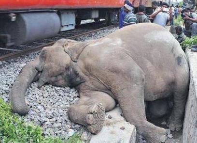 Dead female elephant is fifth in 15 days | Pachyderm Magazine | Scoop.it