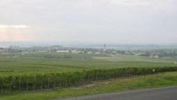 Marché mondial du VIN - La France reste parmi les pays les plus compétitifs | Curation vins | Scoop.it