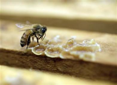 EPA says pesticide harms bees in some cases | Food issues | Scoop.it