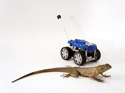 Lizard-inspired robots to the rescue | Social media and education | Scoop.it