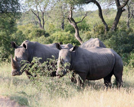 Kruger Park Sightings: Please can we pass? | Kruger & African Wildlife | Scoop.it